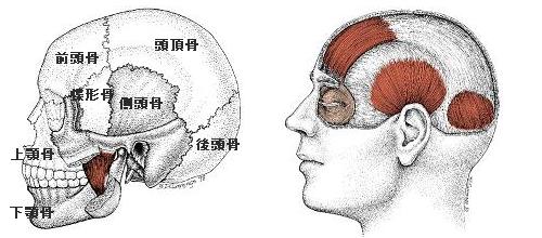頭蓋骨調整の効果って?自分でできる方法は?